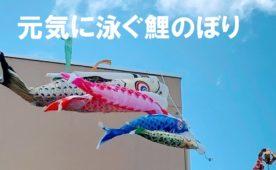 コロナに負けず元気に泳ぐ鯉のぼり!