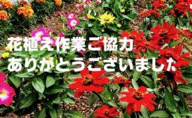 花植え作業ご協力ありがとうございました