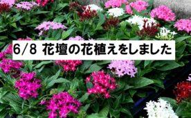 花壇の花植えをしました